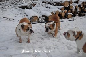 Melody en Jazzlyn steken hun toch uit, gekke bulldoggen