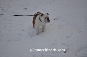 Jazzlyn met een heerlijke sneeuwsnuit