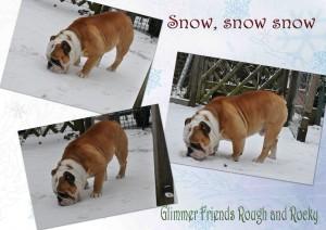 Bulldog Floyd is gek op sneeuwpret