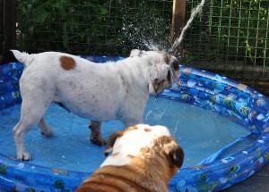 juni 2010 bad1
