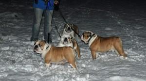 sneeuwpret voor de bulldog familie