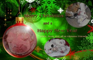 bulldog kerstwens bulldogpups